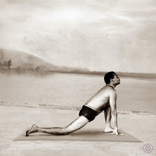 Yoga_Vana_Sun_Salutation_Step_4